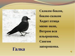 Скоком-боком, боком-скоком Ходит птица мимо окон, Ветром вся взъерошена, Сне