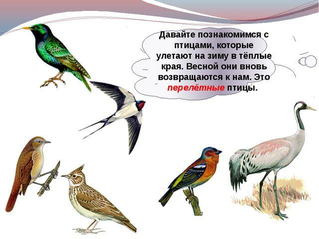 Давайте познакомимся с птицами, которые улетают на зиму в тёплые края. Весной...
