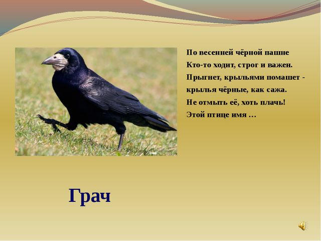 По весенней чёрной пашне Кто-то ходит, строг и важен. Прыгнет, крыльями пома...