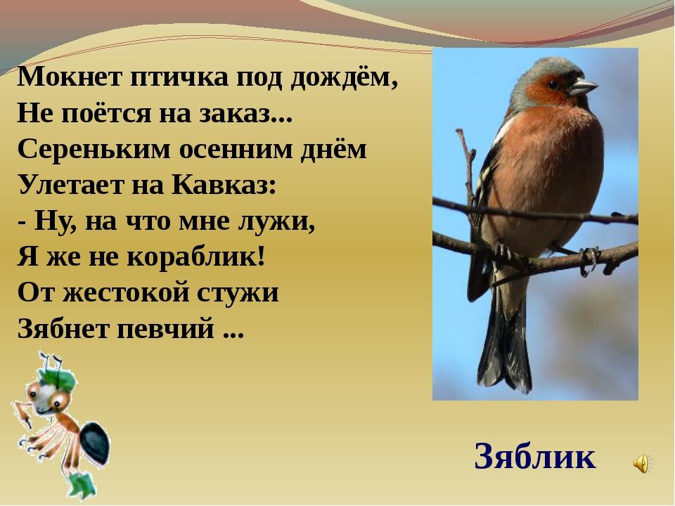 Мокнет птичка под дождём, Не поётся на заказ... Сереньким осенним днём Улетае...