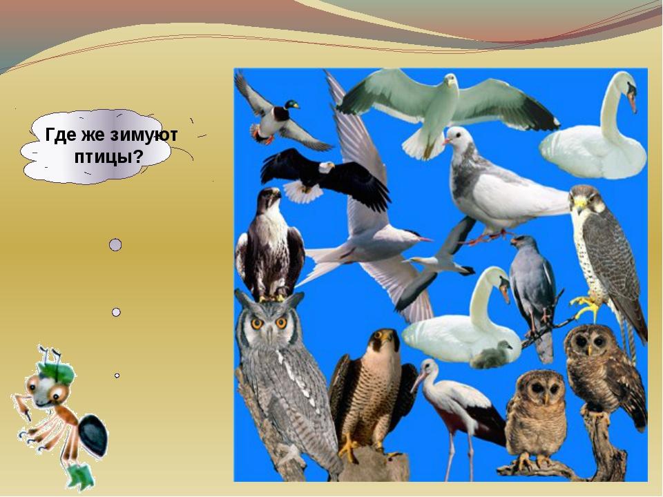 Где же зимуют птицы?
