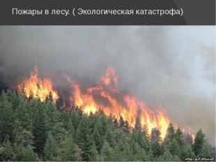 Пожары в лесу. ( Экологическая катастрофа)