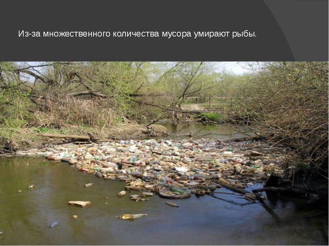 Из-за множественного количества мусора умирают рыбы.