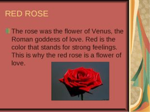 RED ROSE The rose was the flower of Venus, the Roman goddess of love. Red is