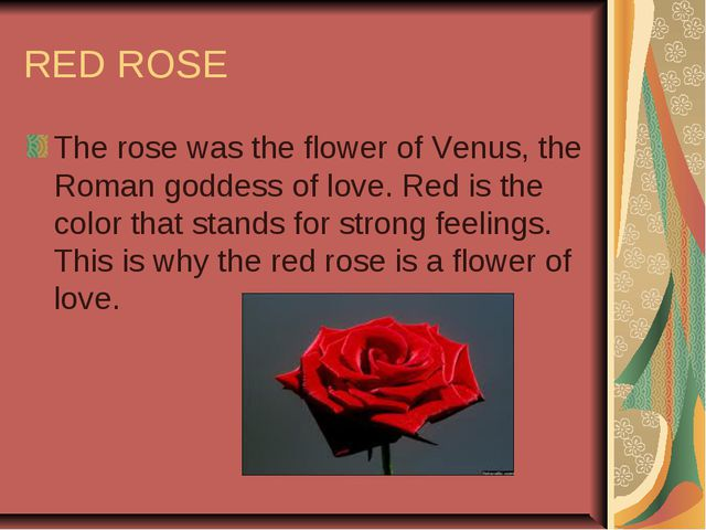 RED ROSE The rose was the flower of Venus, the Roman goddess of love. Red is...