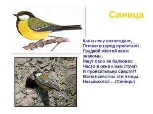Синица Как в лесу похолодает, Птички в город прилетают. Грудкой жёлтой всем з