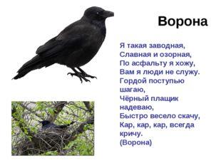 Ворона Я такая заводная, Славная и озорная, По асфальту я хожу, Вам я люди не