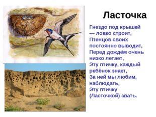 Ласточка Гнездо под крышей — ловко строит, Птенцов своих постоянно выводит, П