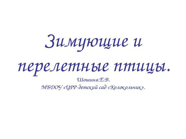 Зимующие и перелетные птицы. Шошина.Е.В. МБДОУ «ЦРР-детский сад «Колокольчик».