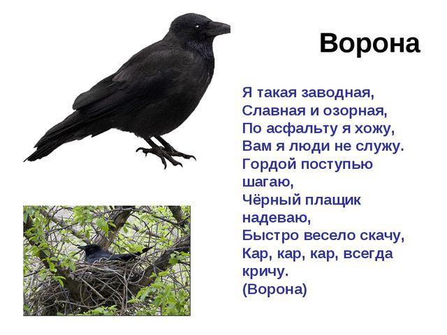 Ворона Я такая заводная, Славная и озорная, По асфальту я хожу, Вам я люди не...