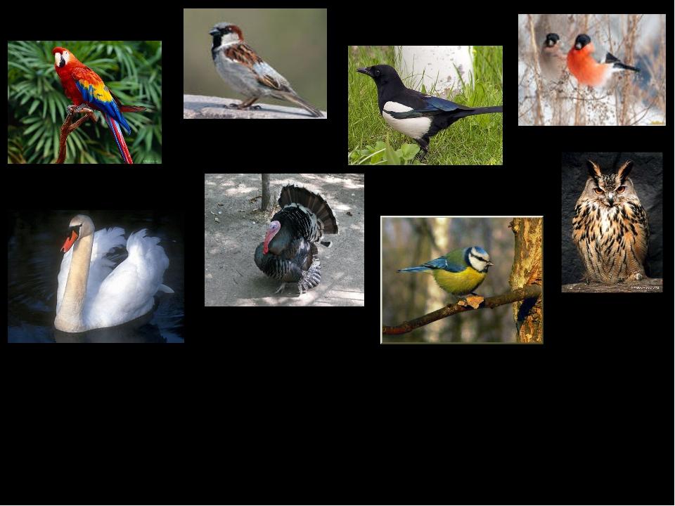 Птицы – это животные. У них крылья, 2 ноги, клюв и перья.