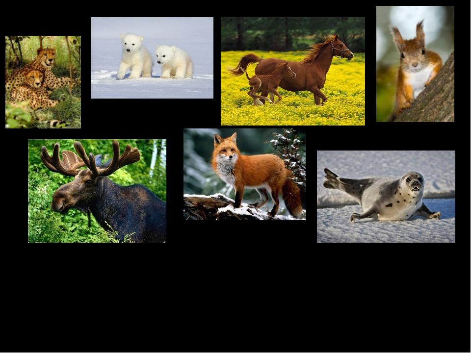 Звери – это животные. У них 4 лапы и шерсть, выкармливают детенышей молоком.