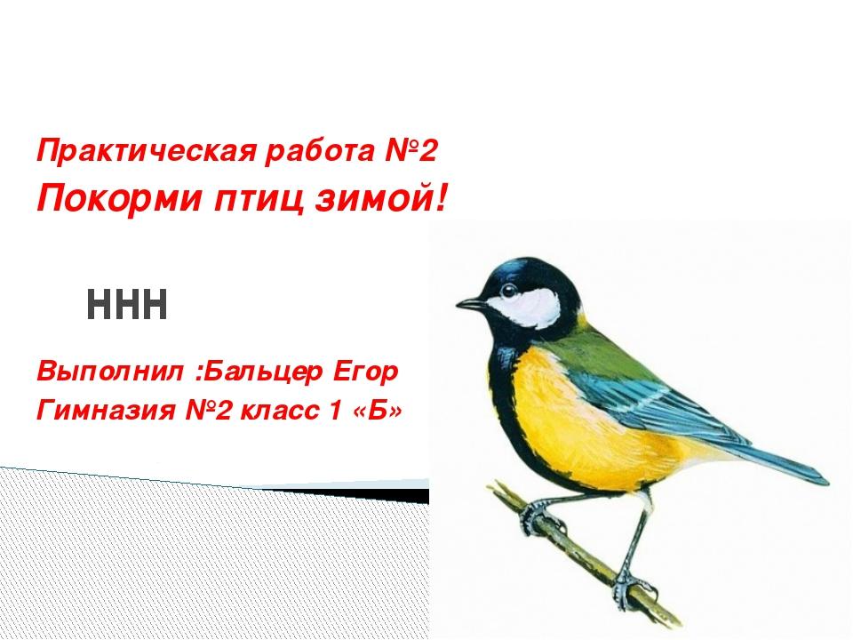 ннн Практическая работа №2 Покорми птиц зимой! Выполнил :Бальцер Егор Гимнази...