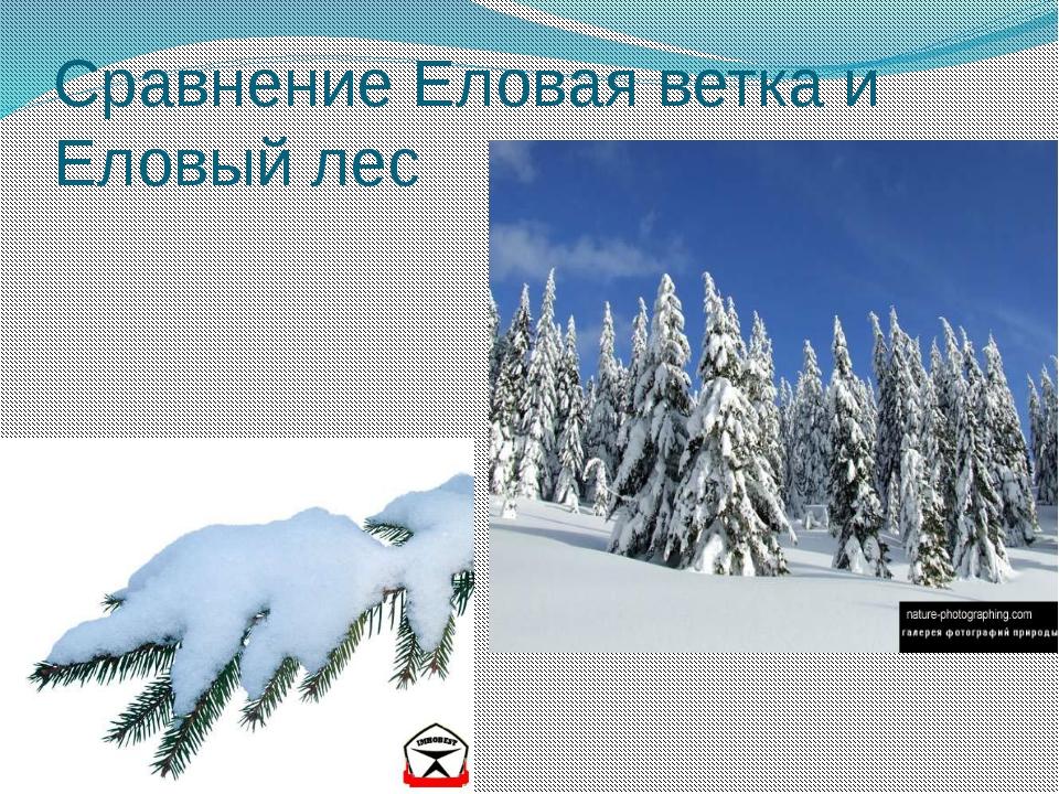 Сравнение Еловая ветка и Еловый лес