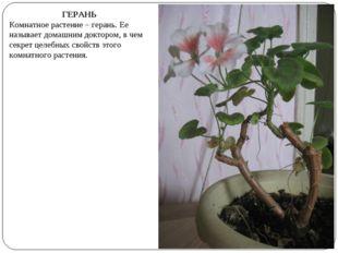 ГЕРАНЬ Комнатное растение – герань. Ее называет домашним доктором, в чем секр