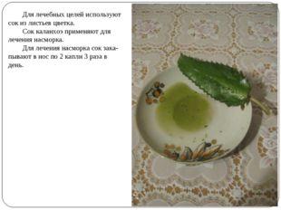 Для лечебных целей используют сок из листьев цветка. Сок каланхоэ применяют