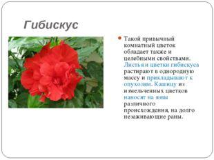 Гибискус Такой привычный комнатный цветок обладает также и целебными свойства