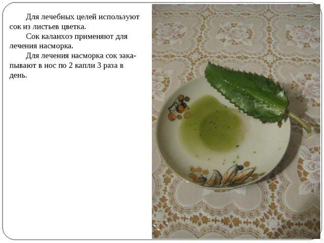 Для лечебных целей используют сок из листьев цветка. Сок каланхоэ применяют...