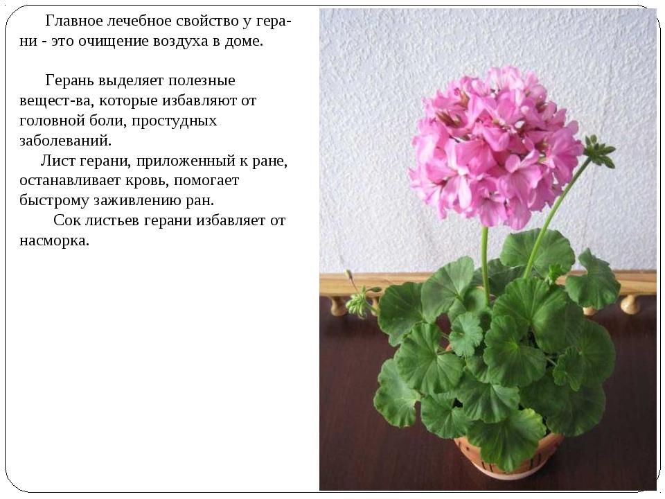 Главное лечебное свойство у гера-ни - это очищение воздуха в доме. Герань вы...