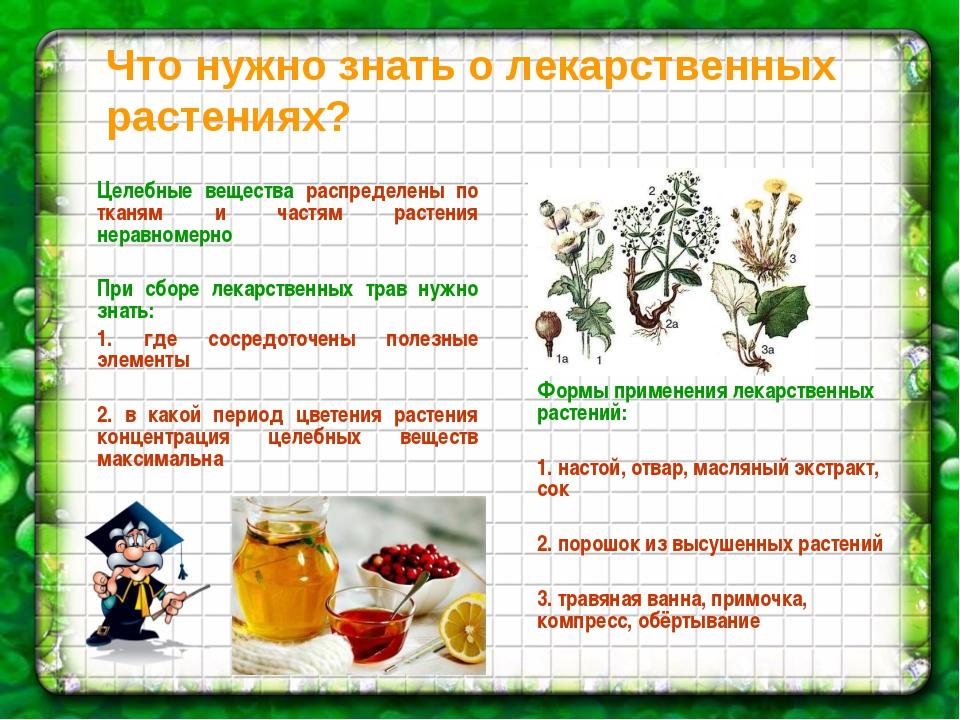 Что нужно знать о лекарственных растениях? Целебные вещества распределены по...