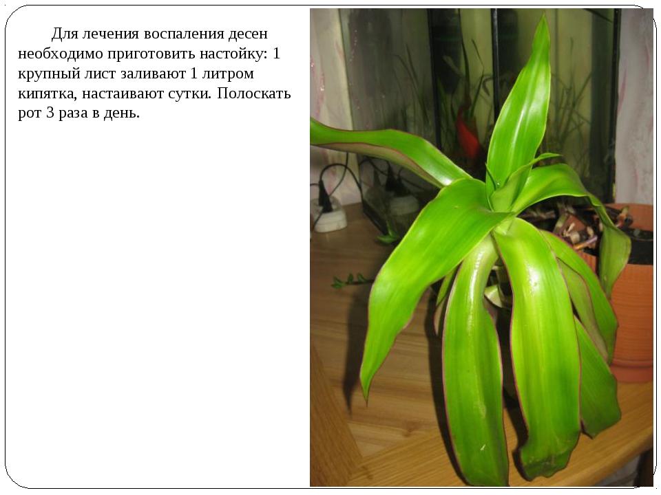 Для лечения воспаления десен необходимо приготовить настойку: 1 крупный лист...