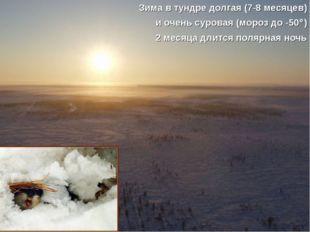 Зима в тундре долгая (7-8 месяцев) и очень суровая (мороз до -50) 2 месяца д