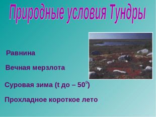 Равнина Вечная мерзлота Суровая зима (t до – 500) Прохладное короткое лето