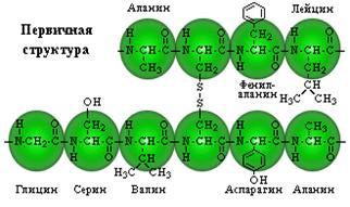 http://festival.1september.ru/articles/565780/img4.jpg