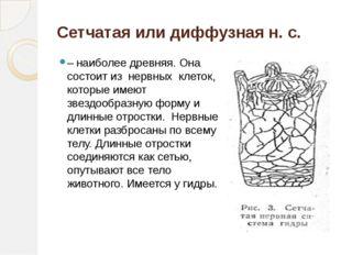 Сетчатая или диффузная н. с. – наиболее древняя. Она состоит из нервных кле