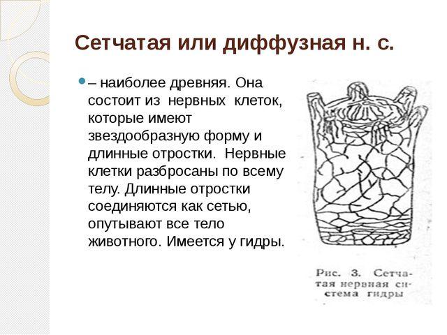 Сетчатая или диффузная н. с. – наиболее древняя. Она состоит из нервных кле...