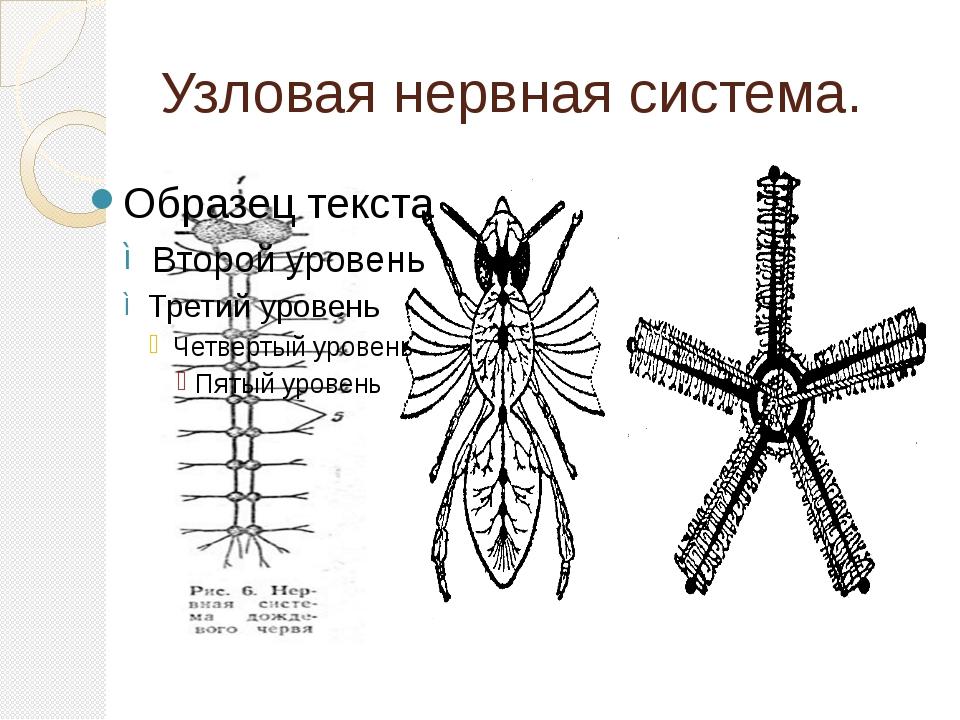 Узловая нервная система.