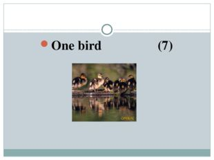 One bird (7)