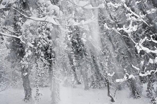 winter00009