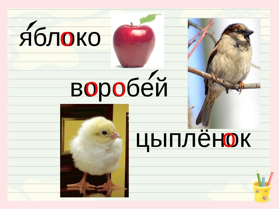 яблоко воробей цыплёнок о о о о