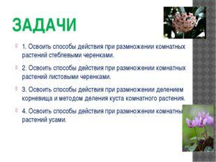 ЗАДАЧИ 1. Освоить способы действия при размножении комнатных растений стеблев
