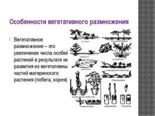Особенности вегетативного размножения Вегетативное размножение – это увеличен