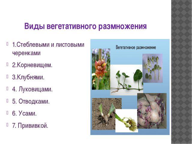 Виды вегетативного размножения 1.Стеблевыми и листовыми черенками 2.Корневище...