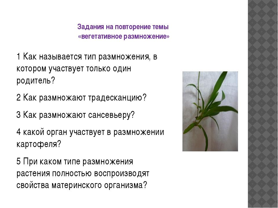Задания на повторение темы «вегетативное размножение» 1 Как называется тип ра...