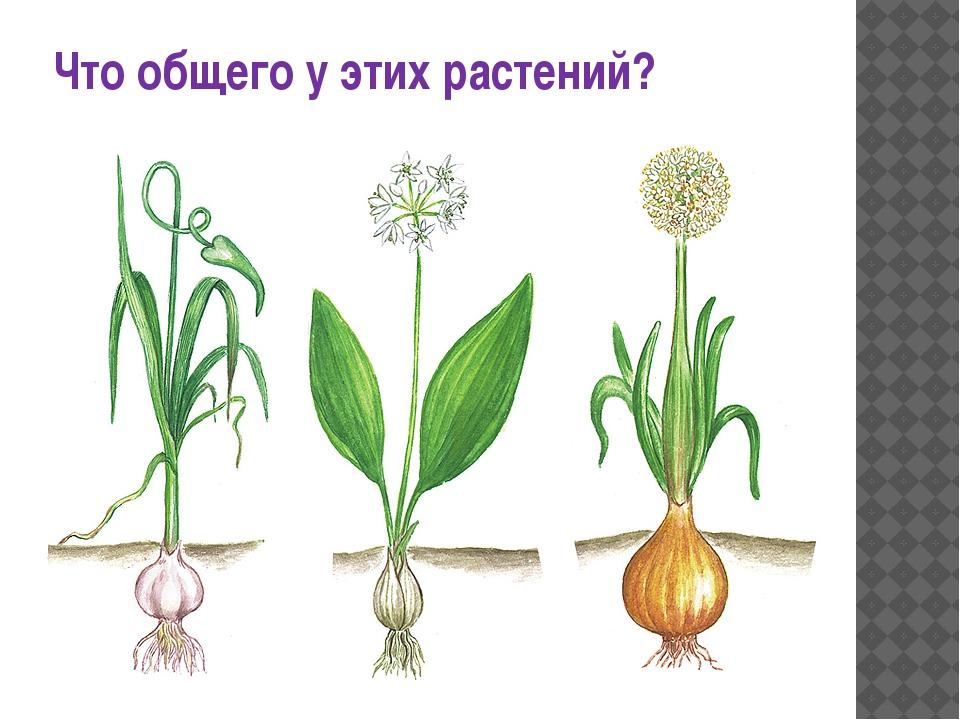 Что общего у этих растений?