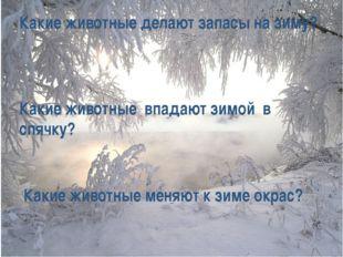 Какие животные делают запасы на зиму? Какие животные впадают зимой в спячку?