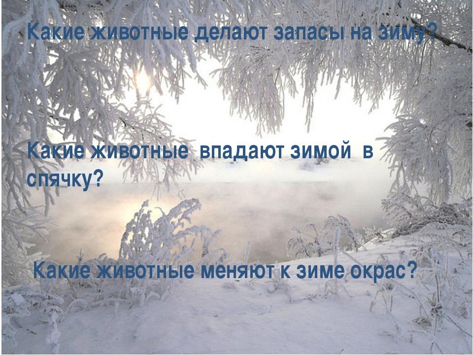 Какие животные делают запасы на зиму? Какие животные впадают зимой в спячку?...