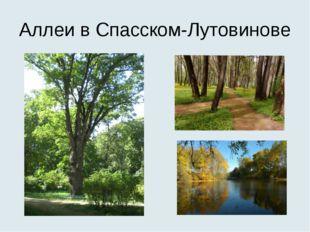 Аллеи в Спасском-Лутовинове