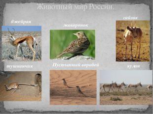 Животный мир России. джейран жаворонок сайгак тушканчик Пустынный воробей кулан