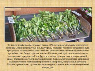Сельское хозяйство обеспечивает свыше 70% потребностей страны в продуктах пи