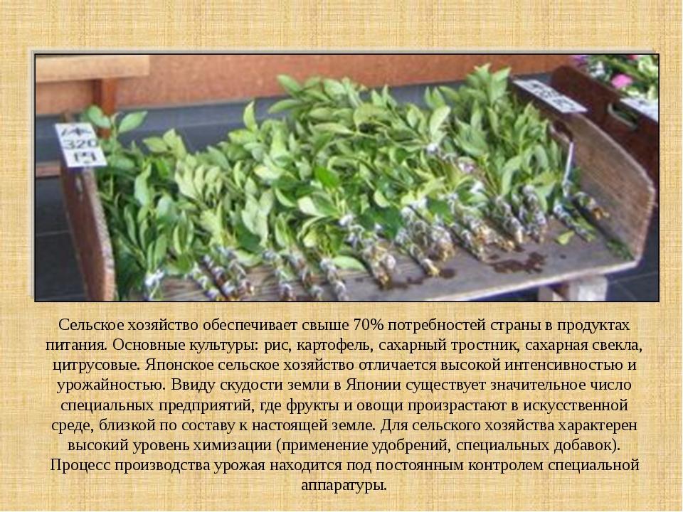Сельское хозяйство обеспечивает свыше 70% потребностей страны в продуктах пи...