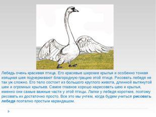 Лебедь очень красивая птица. Его красивые широкие крылья и особенно тонкая из