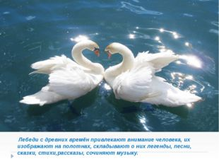 Лебеди с древних времён привлекают внимание человека, их изображают на полот