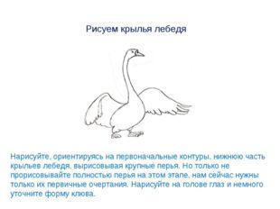 Рисуем крылья лебедя Нарисуйте, ориентируясь на первоначальные контуры, нижню