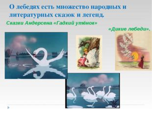 О лебедях есть множество народных и литературных сказок и легенд. Сказки Анде