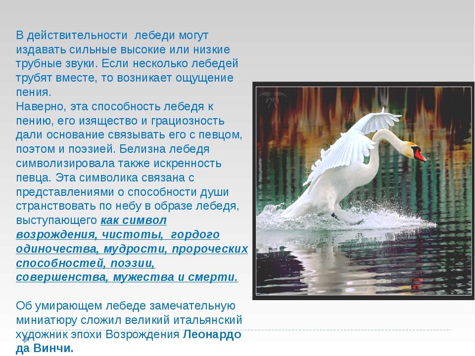 В действительности лебеди могут издавать сильные высокие или низкие трубные з...